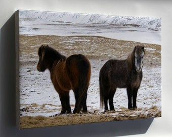 Canvas 16x24; Icelandic Horse, Iceland