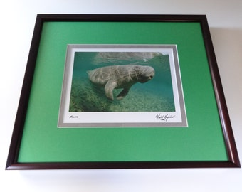 Photo, Photo Art, Photo Print, Framed Photo, Manatee, Manatee Photo, Photo Print, Photography, Manatee Art, Manatee Print, Wildlife Art
