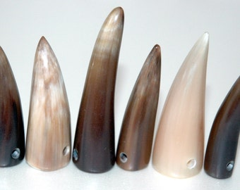 6 water buffalo horn tips