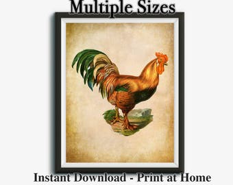 Farmhouse Printable, Vintage Rooster Prints, Rooster Kitchen Decor, Farm Print, Farmhouse Print, Multiple Sizes, Instant Download, 16x20