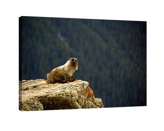 The Marmot Canvas Wall Art