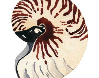Seashell Watercolor Print, Coastal Wall Art