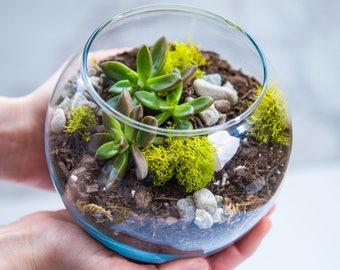 Succulent terrarium kit MEDIUM, terrarium gift, succulent terrarium, gift ideas, miniature garden, glass terrarium, valentine's day gift