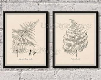 Printable set, Fern print, Illustration, Botanical digital print, Vintage art, Antique illustration, Wall art ferns, 8x10, 11x14, A3, JPG