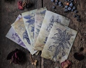 Solanaceae, Witchcraft Antique Botanical Print, Witch Herbs, Book of Spells, Wiccan Altar, Witch Home Decor, Luxury greeting card 6 pack.
