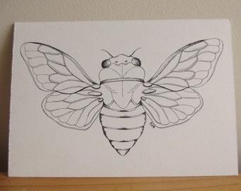 Cicada Ink Illustration