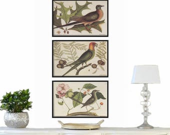Art Print - Bird Illustration - Vintage Print - Print Set of 3 - Home Decor - Farmhouse Decor - Rustic Decor - Prints - Wall Art Prints