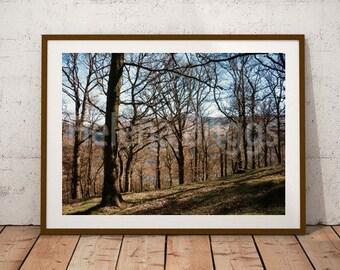 Woodland Prints, Woodland Photography, Woodland Art, Woodland Decor, Woodland Home Decor, Woodland Bathroom, Woodland Bedroom, Lake District