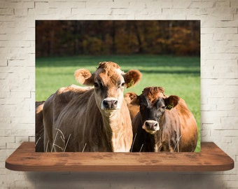 Jersey Cow Photograph - Fine Art Print - Color Photography - Wall Art - Wall Decor -  Farm Pictures - Farm House Decor - Cows