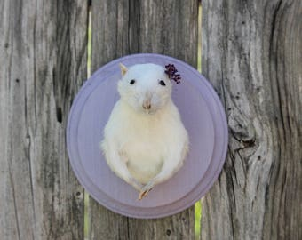 Small White Taxidermy Mount with Floral Accent
