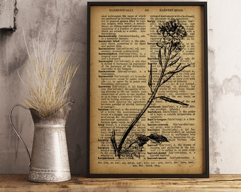 Charlock Dictionary Art Print, Botanical Art Decor, Botanical Illustration, Frower Dictionary Print, Nature botanical print Wall Art (F07)