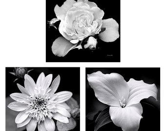 Flower Photography Set, Black and White Photo Set, Set of 3 Prints, Botanical Print Set, Flower Photography, Photo Gift Set, Wall Art Set
