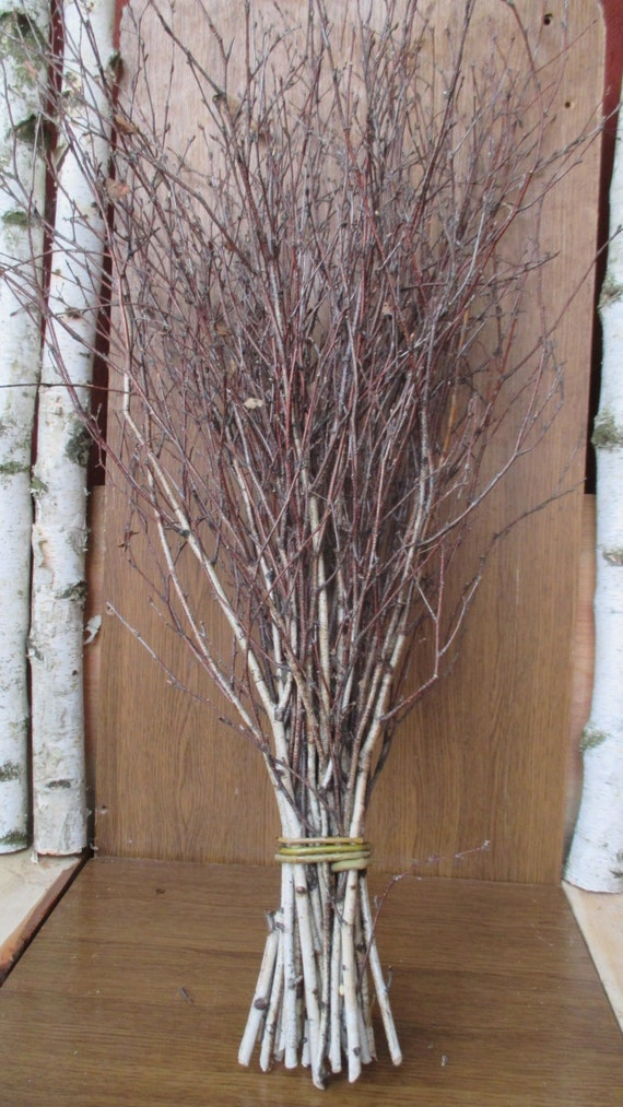 Extra long birch twigsbirch twigsbirch tree branchesbirch for Tree twigs decoration