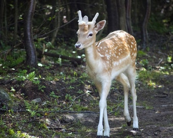 Young deer curious and on the lookout in the forest - photos of deer from several angles in nature