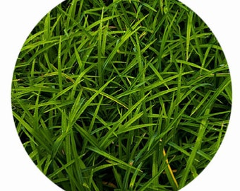 Green Grass Photo Placemat, Reversible Placemat, Set of 4