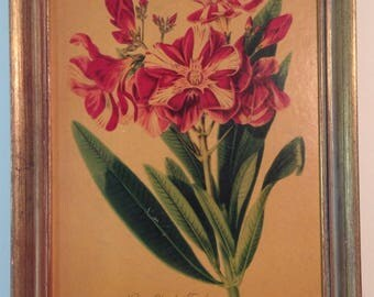 Vintage framed dry mounted lithograph red and white oleander in vintage distressed gold finished wood frame