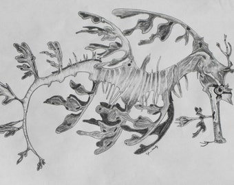 Weedy Sea Dragon Charcoal on Paper
