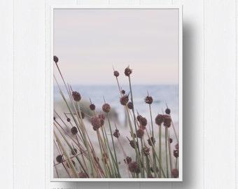 Ocean - Beach - Flower - Coastal - Digital Print - Photography  - Wall Art - Print - Poster - Modern Decor - Travel - Digital Download -