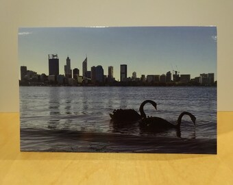 Black Swans Perth City Western Australia Greetings Card Blank Natural unedited Photograph river reflection