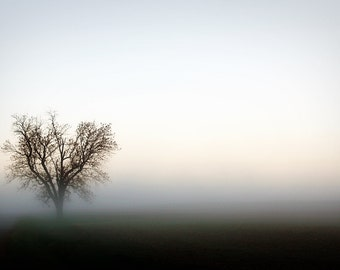 Foggy Morning Solitary Tree Photograph Print Art