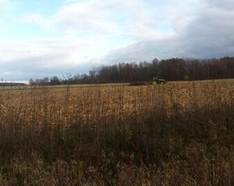 Landscape of Harvest