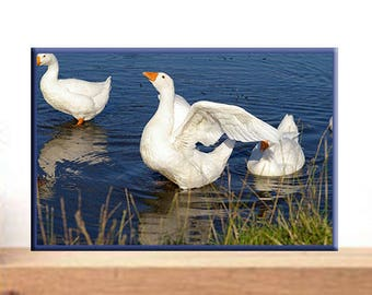 Photo print. Modern wall art. A flock of white geese on a pond spreading wings. Birds. Nature. Animals. Digital. Photo art. Photography.