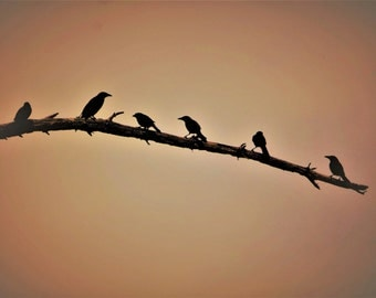 "Pond House Birds Silhouette Greeting Card-""Out On A Limb"""