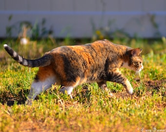 Prowling Cat