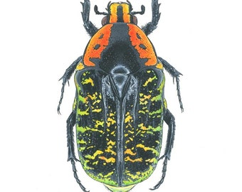 Beetle, Limited Edition Print, Australian Artist