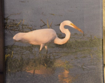 8x8 Egret fishing photo canvas print