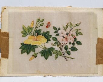 Beautiful Highly detailed Antique Original floral drawing- Coloured pencil/paint. circ 1890-1910 YELLOW/PINK FLOWER with Orange butterfly
