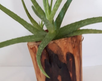 Log decorative to a plant.