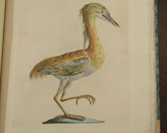 Saverio Manetti hand colored copperplate engraving of the crested night heron