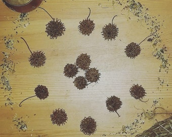 Witch Burrs