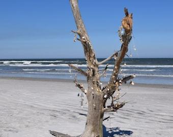 Shell/Spirit Tree Photo