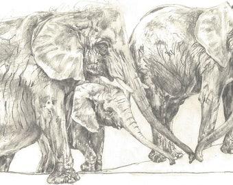 Safari animals cards and prints