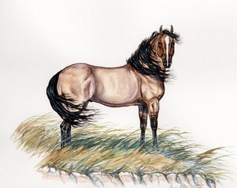 Pryor Mountain Mustang (This is a One of a Kind Orginal Watercolor)
