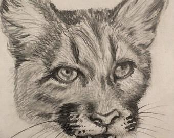 Cougar sketch, animal sketches, animal art, drawings