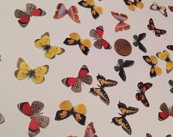 Small Paper Realistic Butterflies - Variety - 8 different Species - 100 pieces - Printed - Cardstock