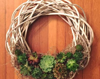 "12"" Living Succulent Willow Wreath"