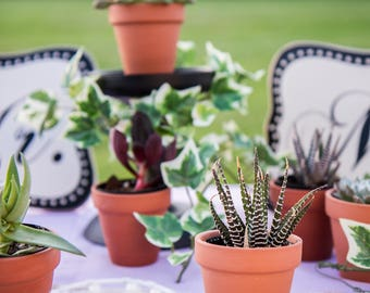 """100 Succulents in 2"""" black pots & carrier tray perfect for wedding favors"""