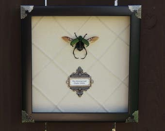 Shining Leaf Chafer Beetle framed Victorian Steampunk Style