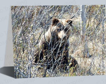 Hiding Grizzly Bear Greeting Card, Yukon Card Art, Bear Prints, Bear, Woodland Animals, Rustic, Canada Art, Unique Grizzly Bear Notecard