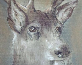 Stag print from an original pastel