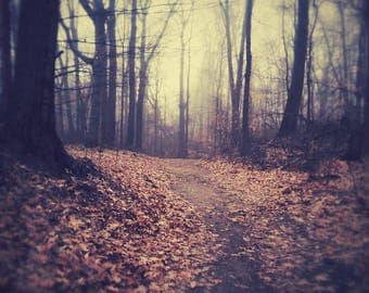 TheKittensMewPhoto, forest, woods, eerie, trees, nature, paths, fence, trail