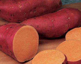 HeirloomSupplySuccess 10 Beauregard Sweet Potato Plant Slip