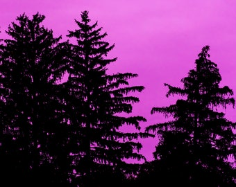 Pink and the Pines