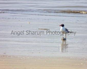 Sea Bird Digital Photo-Digital Download-Photograph-Bird-Sea-Ocean