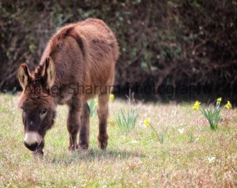 Little Donkey Digital Photo-Digital Download-Digital Photography, Photography, Donkey