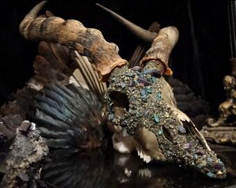 Blesbok Skull * Crystallized Skull * Animal Skull * Taxidermy * Real Animal Skull * Animal Bones *